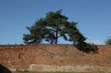 Alte Römermauer
